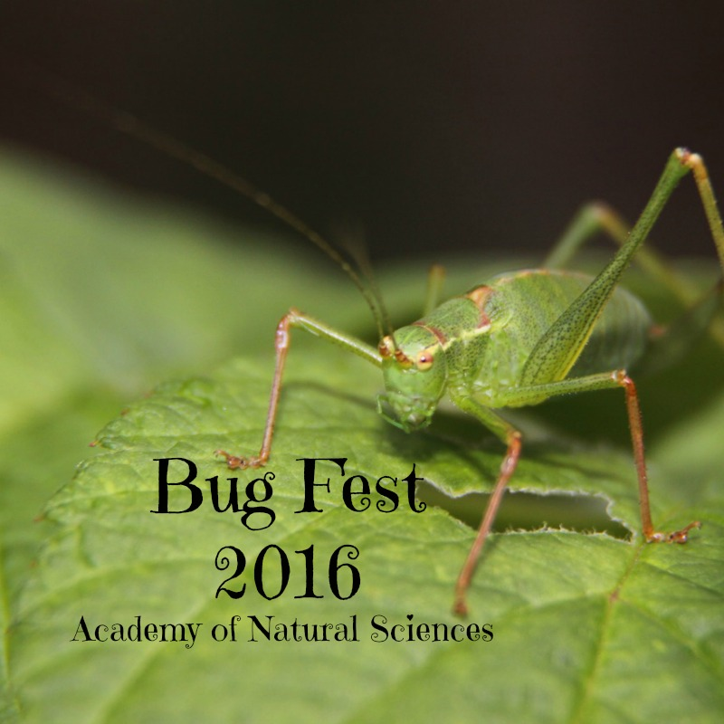Philly Bug Festival: Academy of Natural Sciences